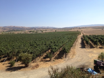 View of the Tarantino Vineyard in the back of the house